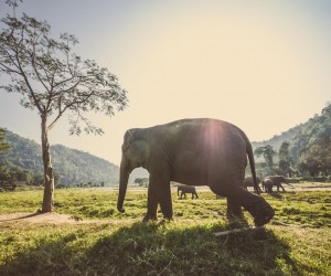 Chiang Mai: best time to go