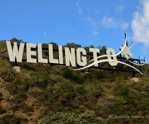 Wellington: best time to go