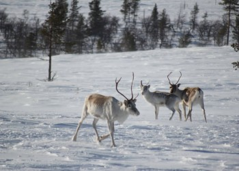 Lapland (Rovaniemi)